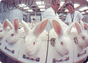 animal testing paper 10 Animal testing research papers dissect what the laboratories around the world do with animals during testing, often discovering that the use of animals is cruel and unnecessary.