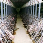 Industrial Animal Farms